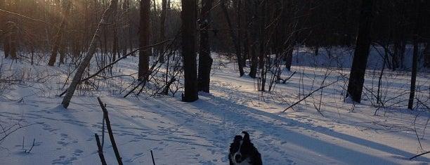 Парк Лесной is one of Территория красивых тел.