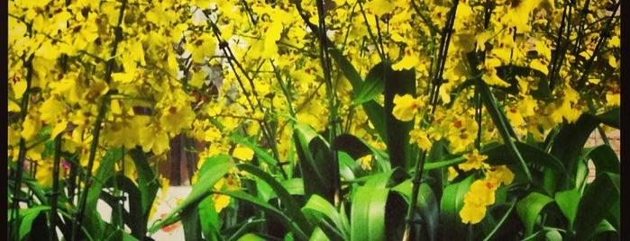 Agapanthus Floricultura is one of Locais curtidos por Elis.