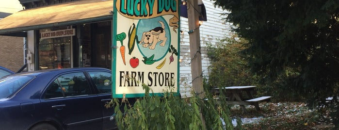Lucky Dog is one of Catskills.