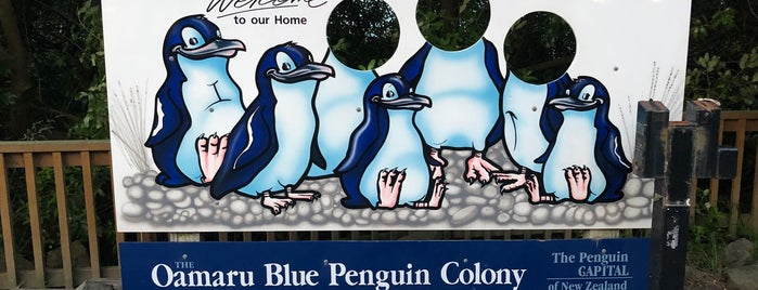 Oamaru Blue Penguin Colony is one of NZ to go.