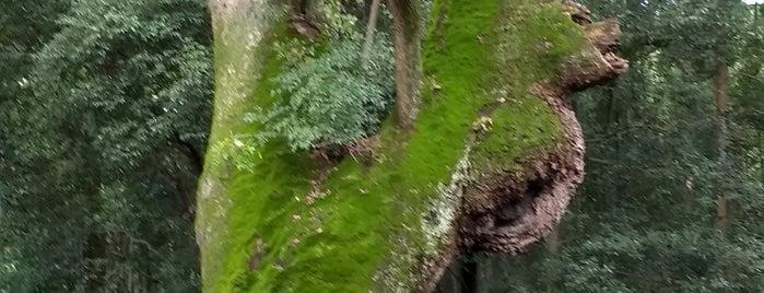 奈良豆比古神社のクスノキ is one of 商品レビュー専門 님이 좋아한 장소.