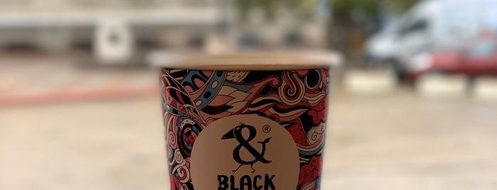Black bird is one of Керчь.