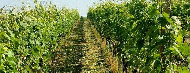 Vigna Orto is one of Posti che sono piaciuti a Cascina.