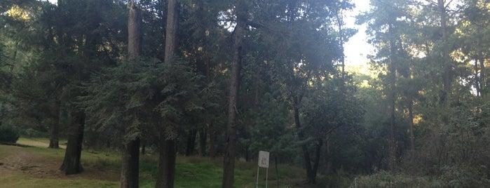 Bosque El Ocotal is one of Los mejores lugares para correr en el DF.
