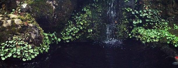 Manjirou is one of Lugares guardados de dsinsky.