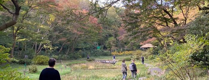 Iris Garden is one of สถานที่ที่ Deb ถูกใจ.