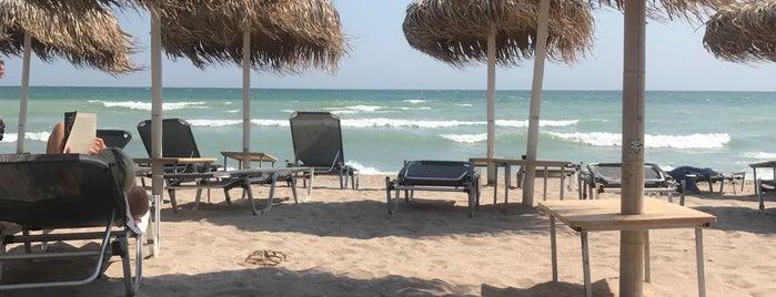 YUVA Beach Bar is one of Shaddawn 님이 좋아한 장소.