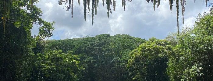 Fern Grotto is one of Kauai.