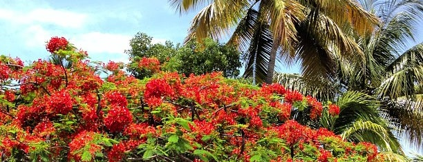 Wyndham Garden at Palmas del Mar is one of Margent : понравившиеся места.