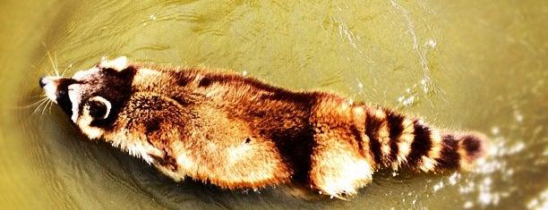 Wasberenverblijf is one of Diergaarde Blijdorp 🇳🇬.