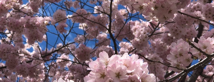 National Cherry Blossom Festival, Inc. is one of Washington.