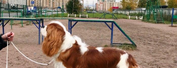 площадка для дрессировки собак is one of Irina✨'ın Beğendiği Mekanlar.