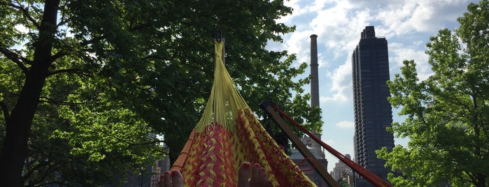 Roosevelt Island Hammock Grove is one of NYC Attractions.