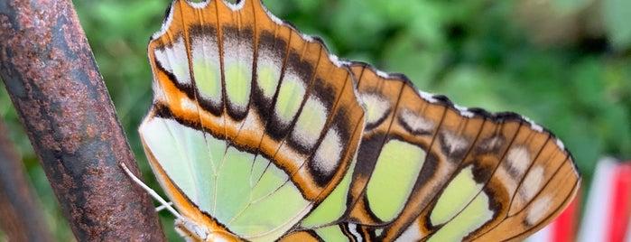 Butterfly House is one of Posti che sono piaciuti a Princesa.