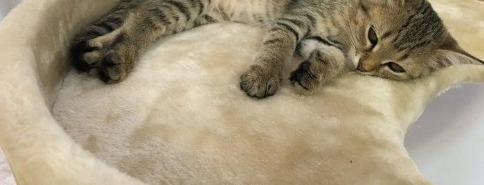 Smitten Kitten is one of I love Des Moines.