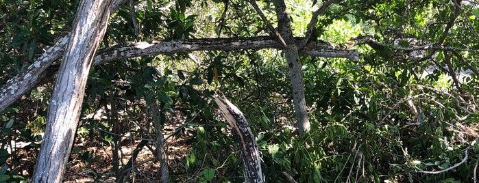 Reserva Ecológica El Corchito is one of Mérida.