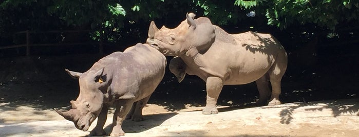 Rhinoceros Enclosure is one of Christineさんのお気に入りスポット.