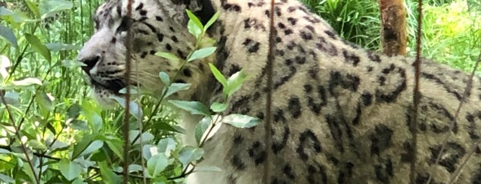 Central Park Zoo - Snow Leopard is one of Locais curtidos por Cristina.