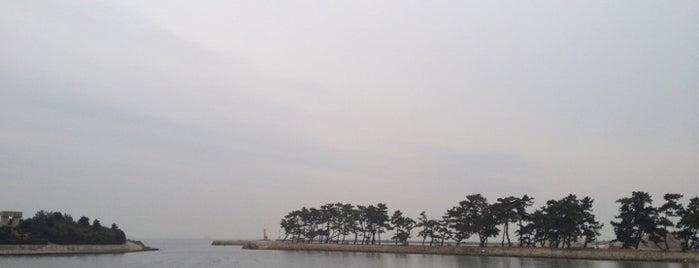 県立高砂海浜公園 is one of 日本の白砂青松100選.