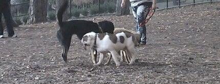 Glenlake Dog Park is one of Lieux sauvegardés par James.