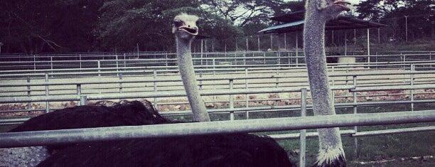 Ladang Burung Unta is one of Go Outdoor, MY #6.