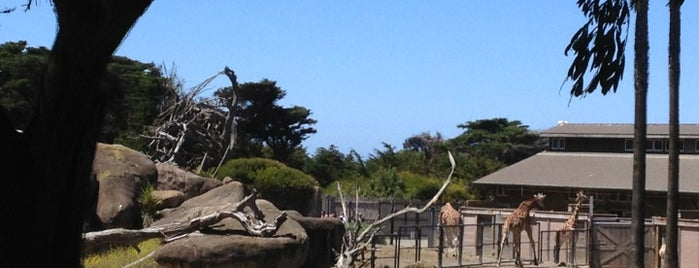 San Francisco Zoo is one of Places to Visit: California Coast.