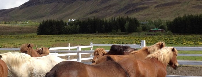 Laxnes horse Farm is one of Iceland.