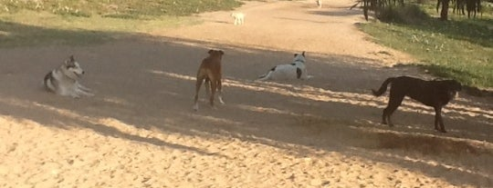 Dog friendly places 🐶
