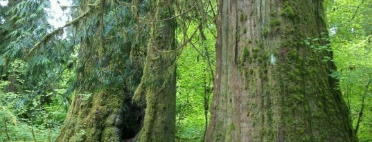 Hoh Rainforest is one of Off-Grid Birthday.
