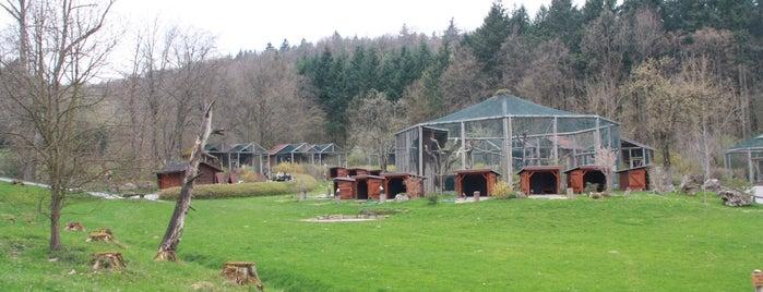 Gaffenberg is one of Orte, die Steffen gefallen.