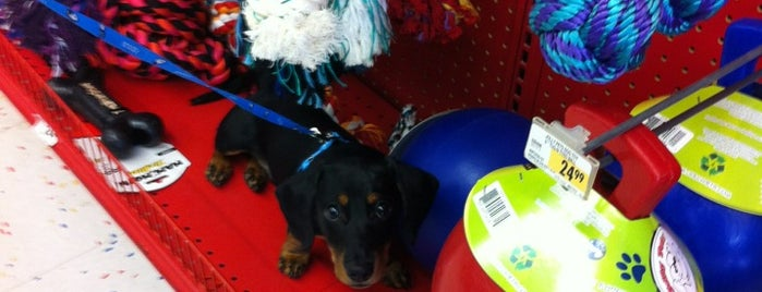 Petco is one of eva's Liked Places.