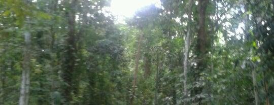 Jardim Botânico do Recife is one of Vale a pena conhecer.