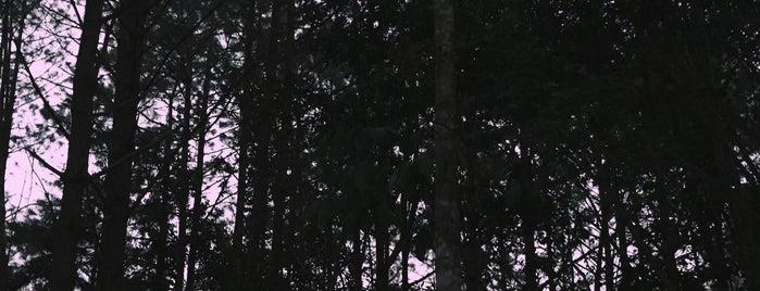 อุทยานแห่งชาติภูหลวง is one of เลย, หนองบัวลำภู, อุดร, หนองคาย.
