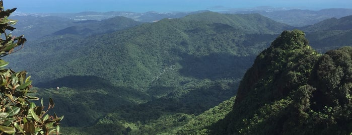 El Yunque National Forest is one of Courtney + Diamond.