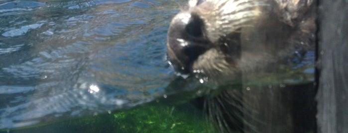 Sea Otter Exhibit is one of Tom 님이 좋아한 장소.