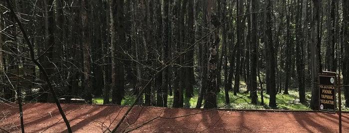Belgrad Ormanı Koşu Parkuru is one of Posti che sono piaciuti a Aylin.