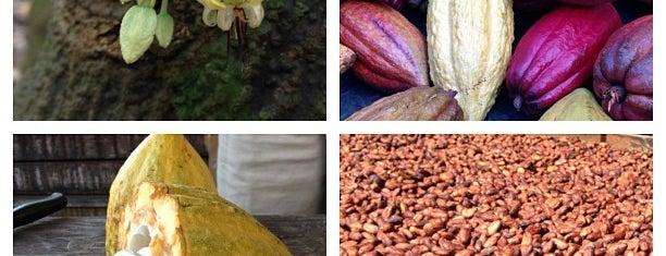 Original Hawaiian Chocolate is one of Kona.