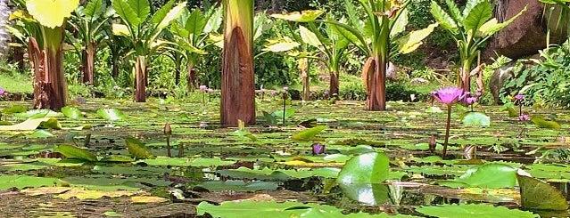 Botanical Garden is one of Lugares que quero conhecer.