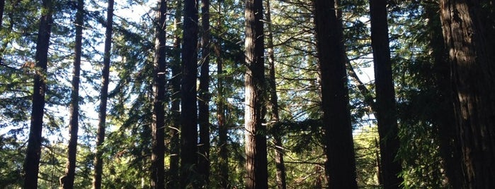 Redwood Grove Nature Preserve is one of Outdoors SF Bay.