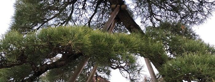 Takao shrine is one of สถานที่ที่ Kazu ถูกใจ.