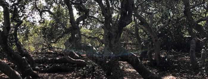 Elfin Forest is one of SLO County Top Spots.