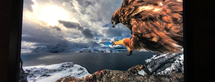 Wildlife Photographer of the Year is one of Lugares favoritos de Lewis.