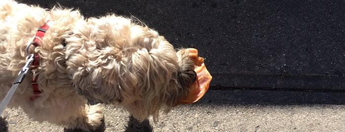 Whisker's Holistic Pet Care is one of Locais curtidos por C.