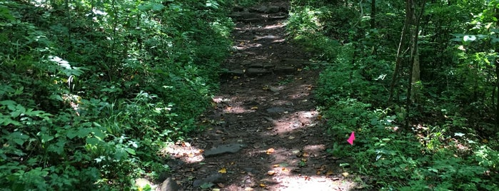 Ruffner Mountain Nature Center is one of America's Top Hiking Trail in Each State.