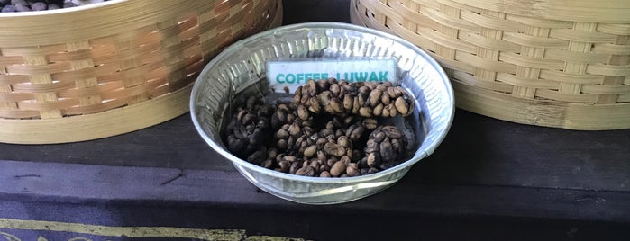Luwak Coffee Sari Amerta Agrotourism is one of Indonesia 🇮🇩.
