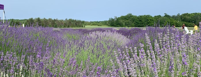 fragrant isle lavender farm is one of Door county.