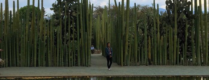 Jardin Etnobotanico De Oaxaca is one of Netoさんのお気に入りスポット.