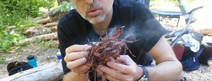 Earth Native Wilderness School is one of Ricardo'nun Beğendiği Mekanlar.