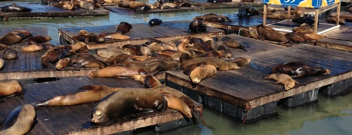 Sea Lions at Pier 39 is one of Favorite spots in San Francisco.