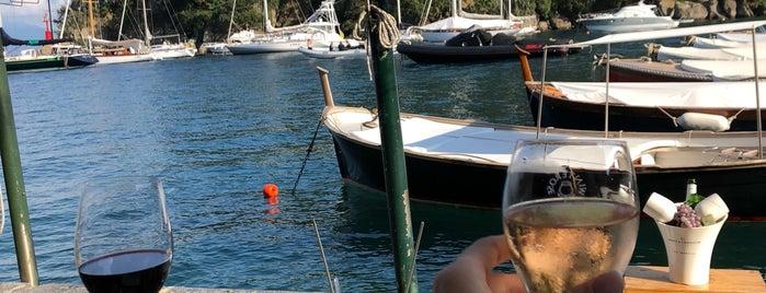 Winterose is one of Portofino ♡.